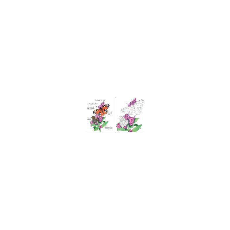 Coloriage Famille Papillon.Jenny Cooper Papillons A Colorier Livres En Famille