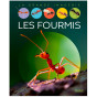Sabine Boccador - les Fourmis